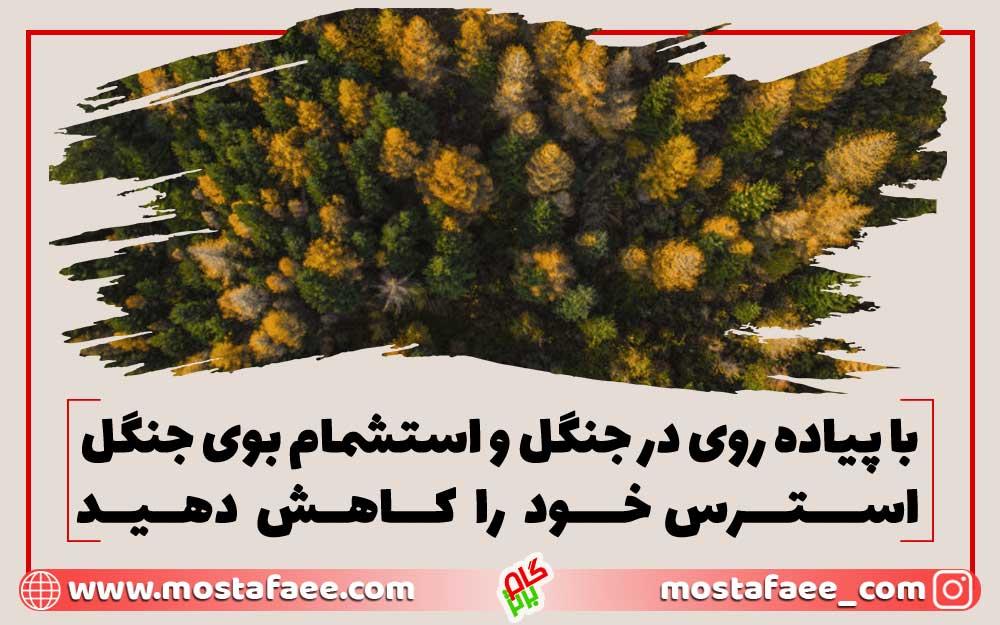 با-پیاده-روی-در-جنگل-و-استشمام-بوی-جنگل-استرس-خود-را-کاهش-دهید