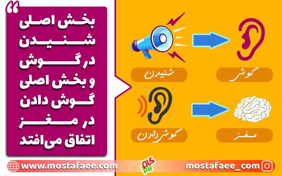 بخش اصلی شنیدن در گوش و بخش اصلی گوش دادن در مغز اتفاق می افتد