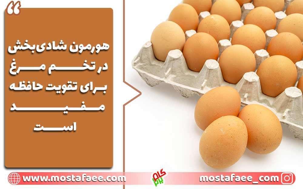 برای تقویت حافظه چه بخوریم؟ تخم مرغ برای تقویت حافظه مفید است