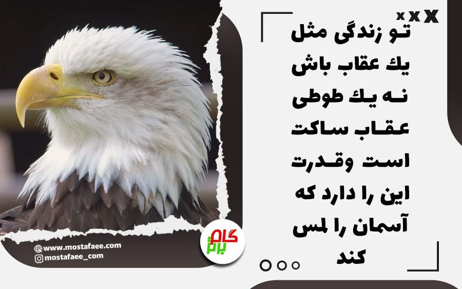 تو زندگى مثل يك عقاب باش نه يك طوطى. طوطى زياد حرف ميزنه، اما نميتونه تو اوج پرواز كنه. اما عقاب ساكته و قدرت اين رو داره كه آسمون رو لمس كنه